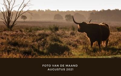 Foto van de maand augustus 2021- De Bock Foto Groep