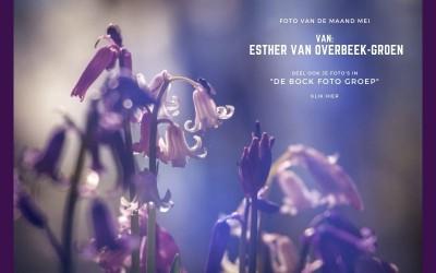 Foto van de maand mei - De Bock Foto Groep